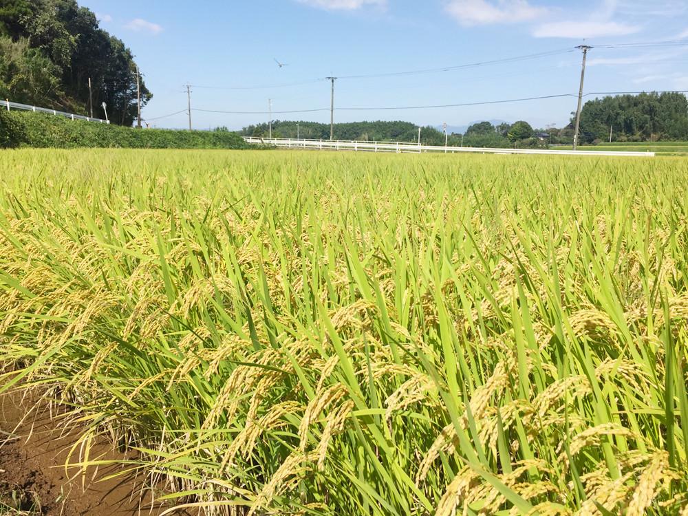 新米2016年-わぶ城湧水農園のお米